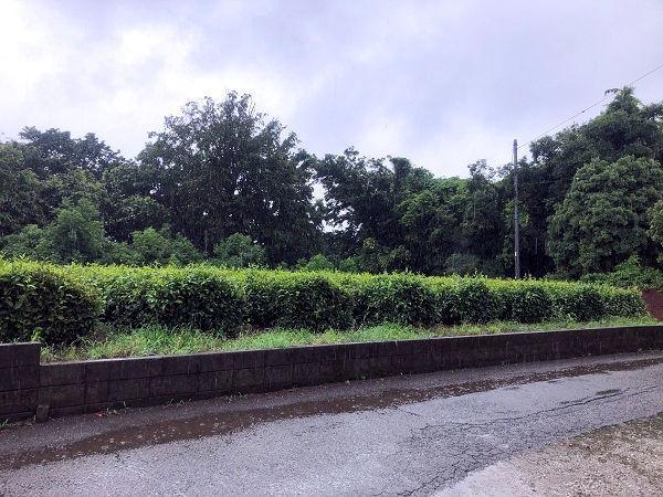 柿屋の前の畑.JPG