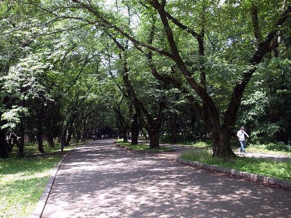 光が丘公園.JPG
