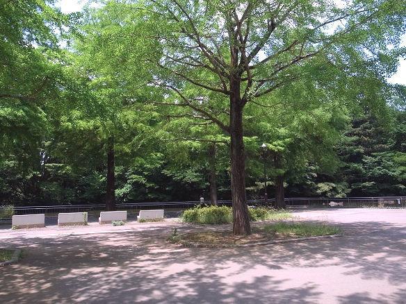 光が丘公園内.JPG